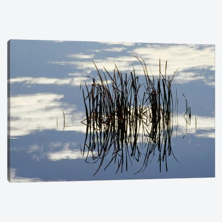 Common Cattail Blades Reflected In Pond In Winter, Malheur National Wildlife Refuge, Oregon Canvas Print #GEE8} by Gerry Ellis Canvas Artwork