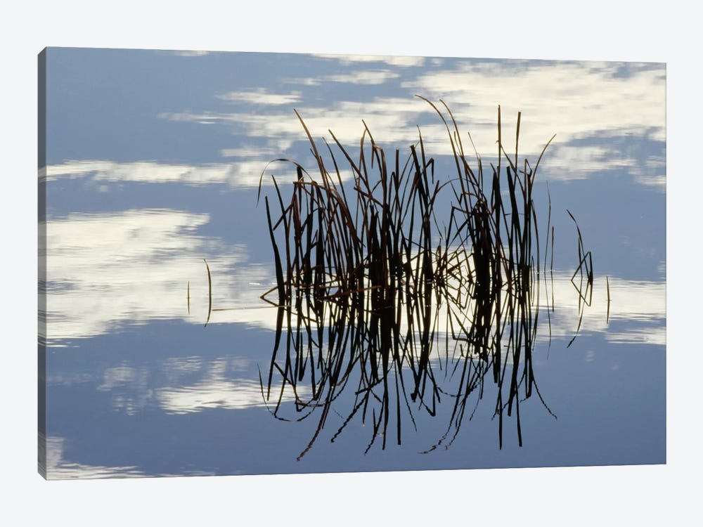 Common Cattail Blades Reflected In Pond In Winter, Malheur National Wildlife Refuge, Oregon by Gerry Ellis 1-piece Canvas Wall Art