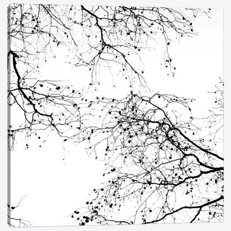 Black Branches II Square Canvas Print #GEL104} by Monika Strigel Canvas Art Print
