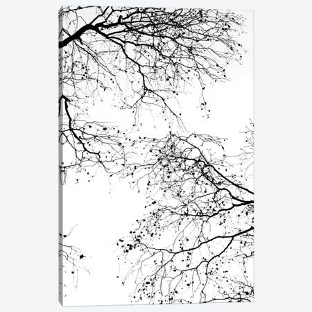 Black Branches II Canvas Print #GEL105} by Monika Strigel Canvas Print