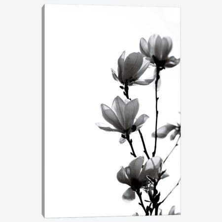 Black Magnolia Canvas Print #GEL120} by Monika Strigel Canvas Artwork