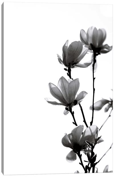 Black Magnolia Canvas Art Print