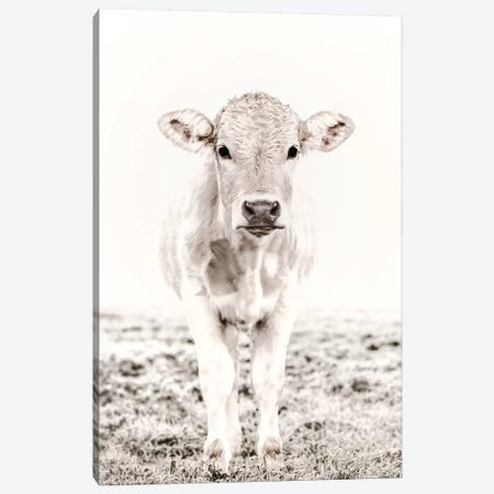 Blonde Cattle Maverick White Canvas Print #GEL122} by Monika Strigel Canvas Wall Art