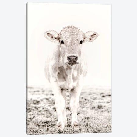 Blonde Cattle Maverick White Canvas Print #GEL122} by Monika Strigel Canvas Wall Art