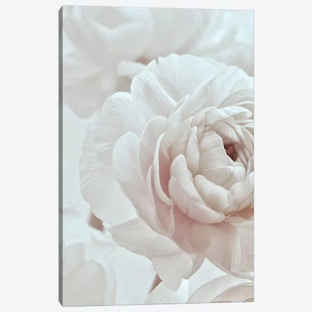 Blossom White I Canvas Print #GEL124} by Monika Strigel Art Print