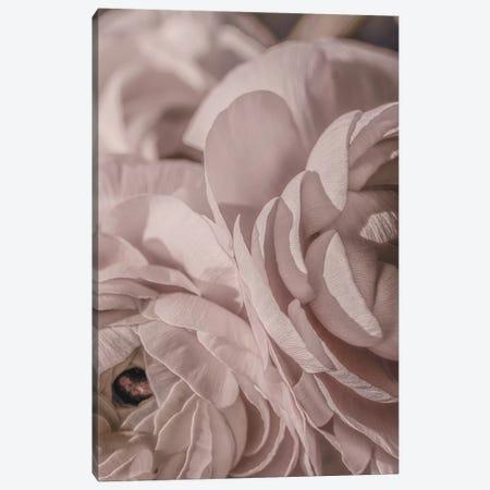 Buttercup Floral Blush Dark I Canvas Print #GEL127} by Monika Strigel Canvas Art Print