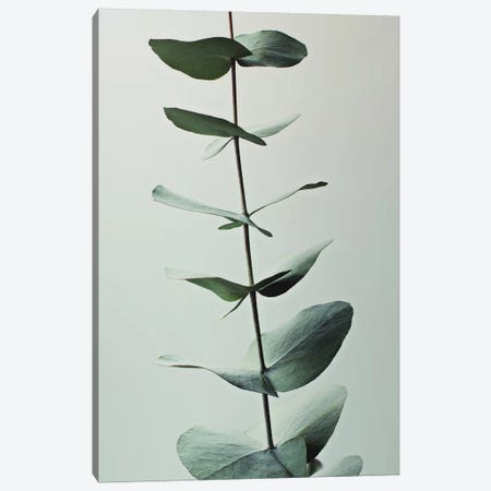 Eucalyptus Green I Canvas Print #GEL144} by Monika Strigel Art Print