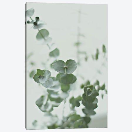 Eucalyptus Green II Canvas Print #GEL145} by Monika Strigel Canvas Art Print
