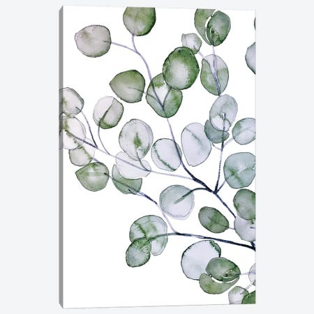 Eucalyptus Watercolor Canvas Print #GEL147} by Monika Strigel Canvas Print