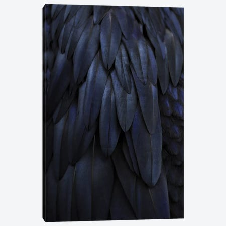 Feathers Dark Blue Canvas Print #GEL156} by Monika Strigel Canvas Artwork