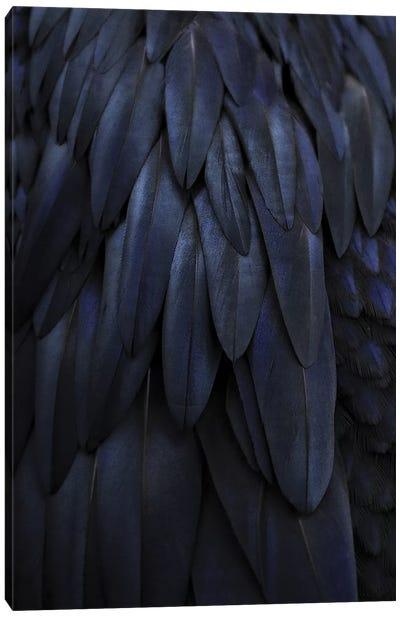 Feathers Dark Blue Canvas Art Print