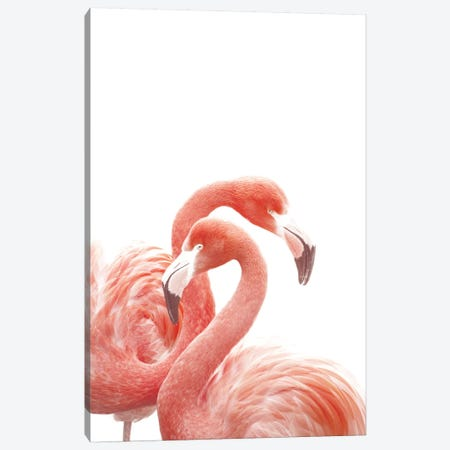 Flamingos White Canvas Print #GEL166} by Monika Strigel Canvas Print
