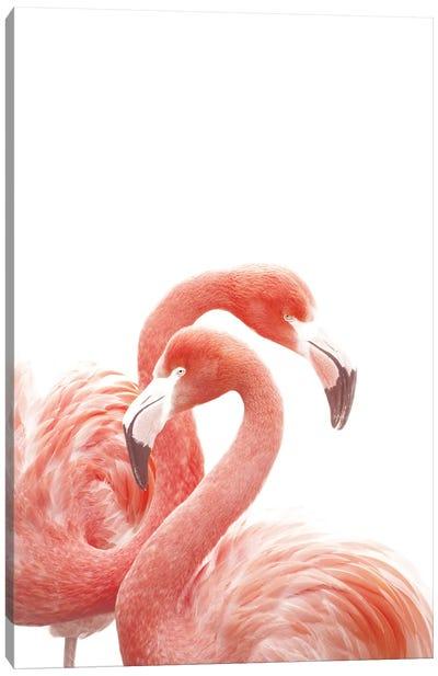 Flamingos White Canvas Art Print
