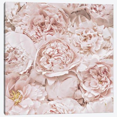 Flowers Peony Blush Square 3-Piece Canvas #GEL170} by Monika Strigel Canvas Print