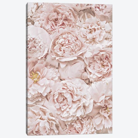 Flowers Peony Blush Canvas Print #GEL171} by Monika Strigel Art Print
