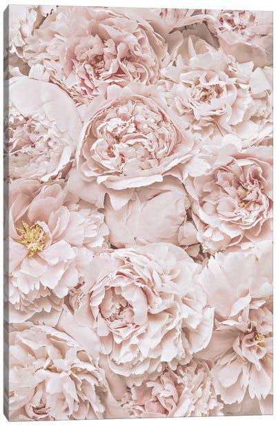 Flowers Peony Blush Canvas Art Print