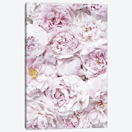 Flowers Peony Pink Canvas Print #GEL172} by Monika Strigel Art Print
