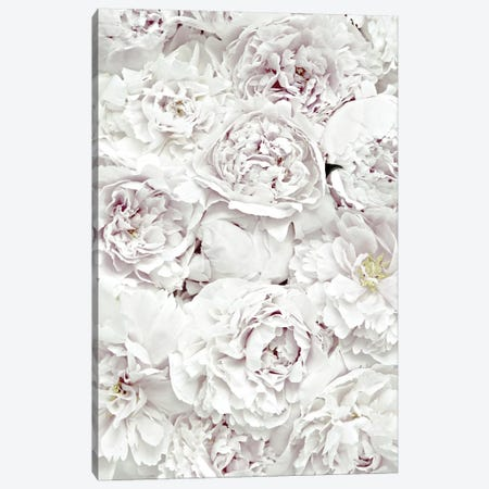 Flowers Peony White Canvas Print #GEL173} by Monika Strigel Canvas Art Print
