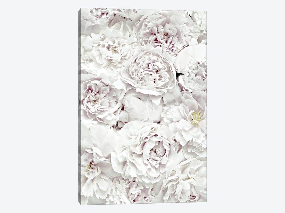 Flowers Peony White by Monika Strigel 1-piece Canvas Wall Art