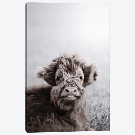 Highland Cattle Calf Alf Canvas Print #GEL174} by Monika Strigel Canvas Art