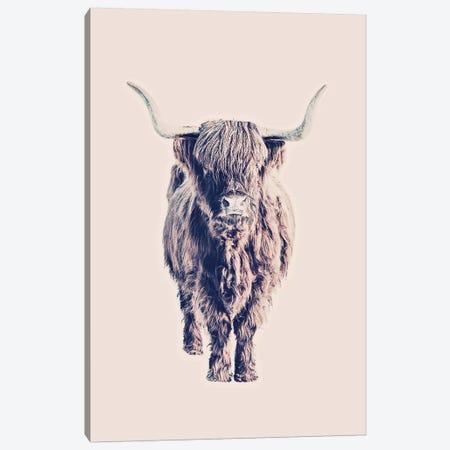 Highland Cattle Colin Rose Canvas Print #GEL175} by Monika Strigel Canvas Artwork