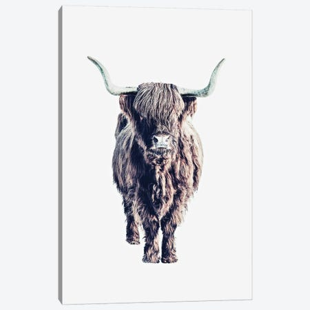 Highland Cattle Colin White Canvas Print #GEL177} by Monika Strigel Canvas Art