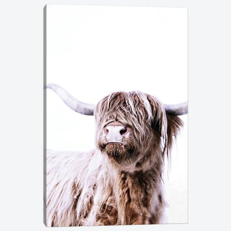 Highland Cattle Frida Canvas Print #GEL178} by Monika Strigel Canvas Art Print