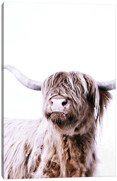 Highland Cattle Frida Canvas Art Print