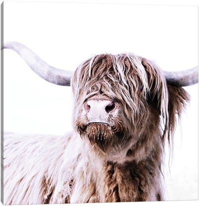 Highland Cattle Frida I Square Canvas Art Print