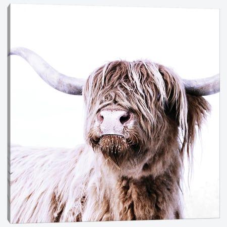 Highland Cattle Frida I Square Canvas Print #GEL179} by Monika Strigel Canvas Art Print