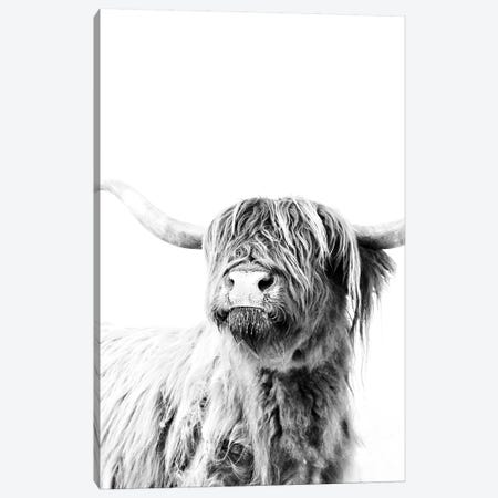 Highland Cattle Frida II Canvas Print #GEL180} by Monika Strigel Canvas Artwork