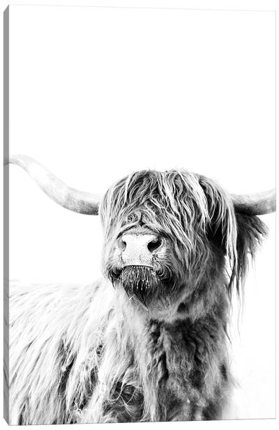 Highland Cattle Frida II Canvas Art Print
