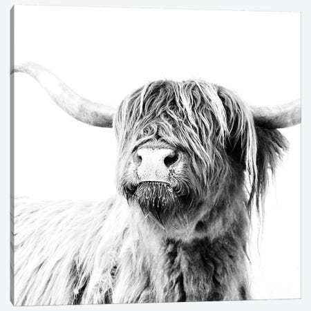 Highland Cattle Frida Black And White Square Canvas Print #GEL181} by Monika Strigel Canvas Art