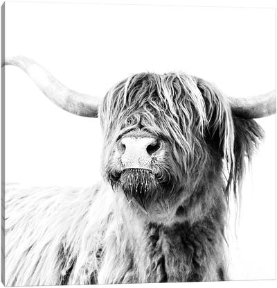 Highland Cattle Frida Black And White Square Canvas Art Print