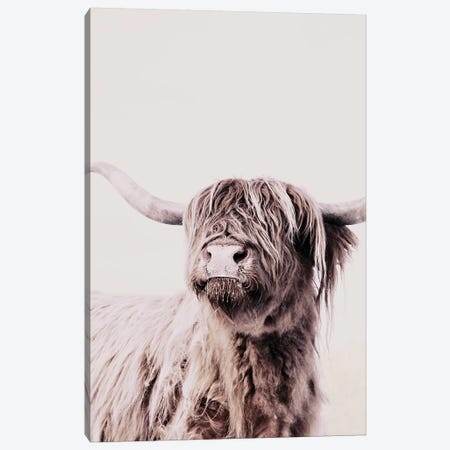 Highland Cattle Frida Creme Canvas Print #GEL182} by Monika Strigel Canvas Wall Art