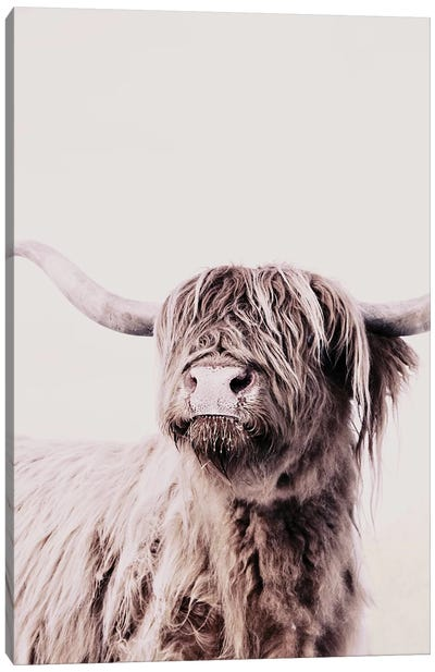 Highland Cattle Frida Creme Canvas Art Print