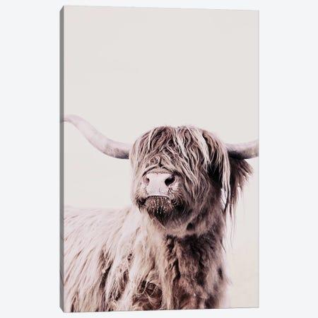 Highland Cattle Frida Creme Canvas Print #GEL182} by Monika Strigel Canvas Wall Art