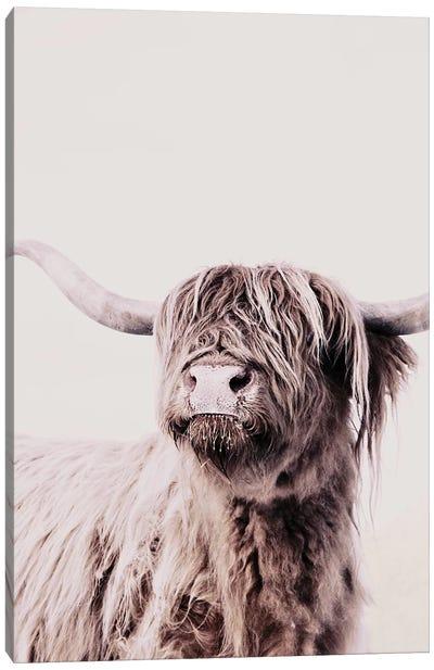 Highland Cattle Frida Creme Canvas Art Print