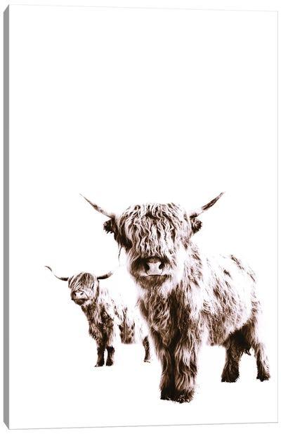 Highland Cows Lulu And Sara Canvas Art Print