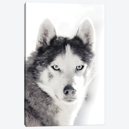 Husky Portrait Canvas Print #GEL187} by Monika Strigel Art Print
