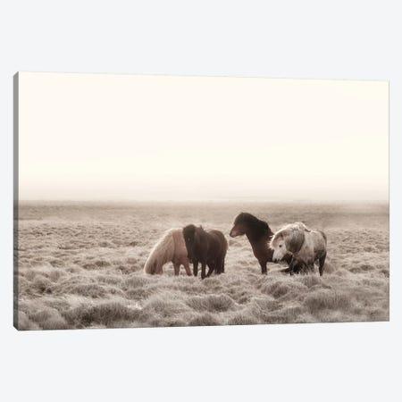 Iceland Wild Horses I Canvas Print #GEL197} by Monika Strigel Canvas Wall Art