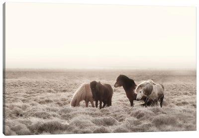 Iceland Wild Horses I Canvas Art Print