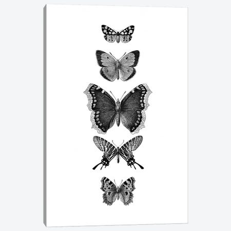 Inked Butterflies Canvas Print #GEL198} by Monika Strigel Canvas Print