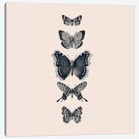 Inked Butterflies Beige Square Canvas Print #GEL200} by Monika Strigel Canvas Print