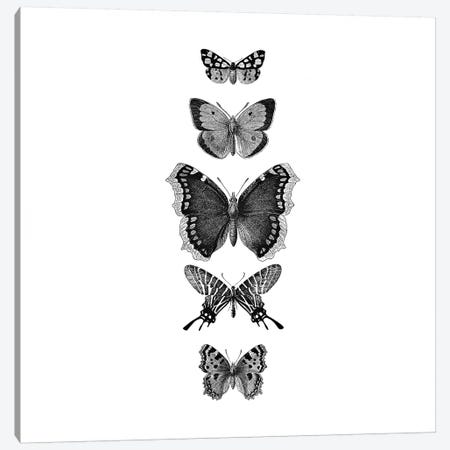 Inked Butterflies Black And White Square Canvas Print #GEL201} by Monika Strigel Art Print