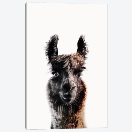 Lama George Canvas Print #GEL203} by Monika Strigel Canvas Print