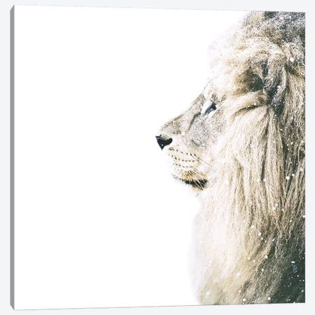 Lion In Snow Square Canvas Print #GEL205} by Monika Strigel Canvas Artwork