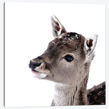 Little Fawn Fiona II Square Canvas Print #GEL208} by Monika Strigel Canvas Print