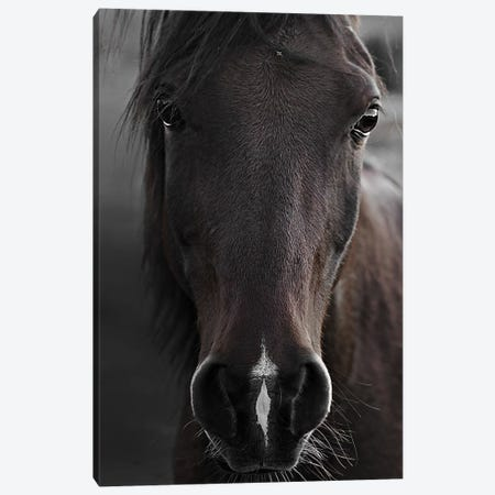 Dark Horse Canvas Print #GEL20} by Monika Strigel Canvas Print
