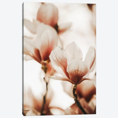 Magnolia Peach I Canvas Print #GEL212} by Monika Strigel Canvas Artwork